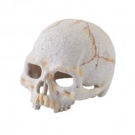 Exo Terra Primate Skull Small (PT2926) NEW